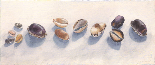 One Dozen Cowries