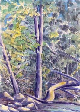 Trees Fallen & Standing