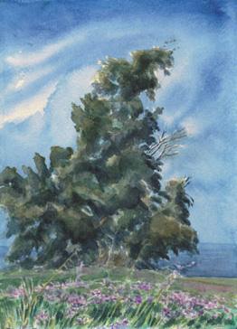 Eucalyptus & Wild Radish
