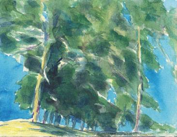 Bluffs Trees
