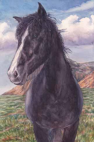 Black Roan Beauty