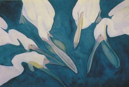 Pelicanus