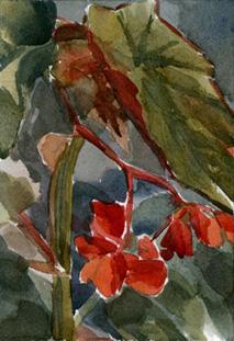 Claudias Begonias