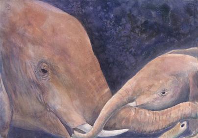 Elephants Touching