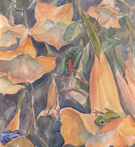 Flora & Amphibia