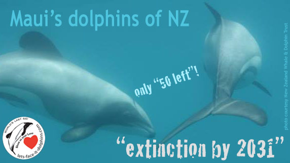 IWC to consider imminent extinction of Maui's dolphins