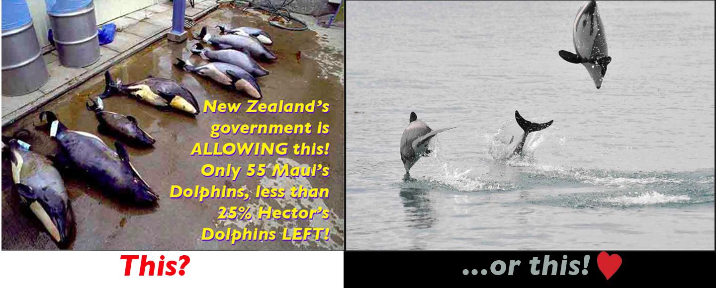 Unicorns, Maui's Dolphins, Sumatran Rhinos, New Zealand Sea Lions, Yellow-eyed Penguins, and Irrawaddy River Dolphins, ...Oh My!!!