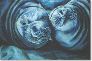 Mirounga Smiles (Elephant Seals)