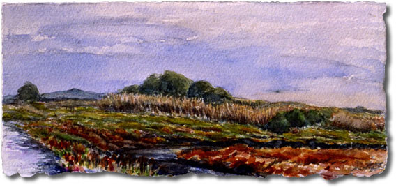 Carpinteria Salt Marsh