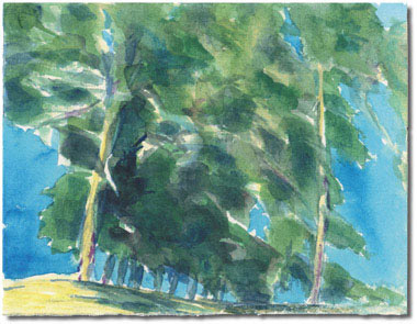 Bluffs Trees (Carpinteria Bluffs)
