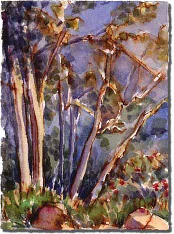 Platanus (Sycamore trees)