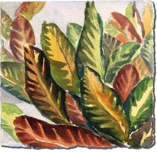 Crotons